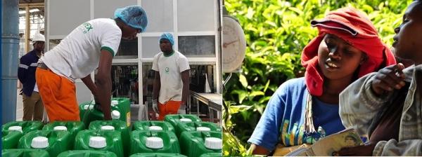 서 아프리카에서 가장 큰 야자 기름 생산 및 정제 공장 인 Sania Cie는 일자리를 창출하고 대부분의 제품을 수출하며 Wood Foundation은 르완다, 탄자니아 및 기타 국가의 투자자 및 다국적 기업에 4 만 명 이상의 차 농가를 연결합니다