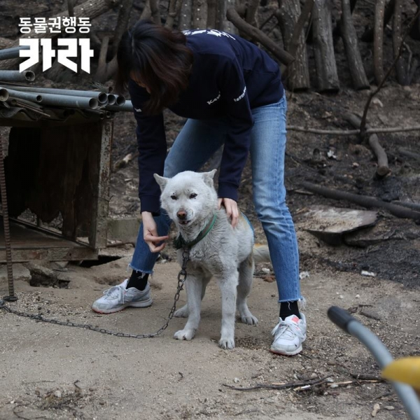 동물권단체 '카라'의 활동가들이 강원 산불 현장을 찾아 동물을 돌보고 있다./사진=카라
