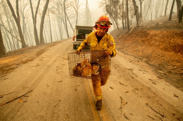 미국 캘리포니아에서 발생한 산불 진압 중 고양이를 구조하는 소방관의 모습./사진=AP통신